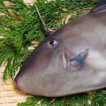 フォアグラハギが魚フォアグラ?値段や食べ方と場所を公開!