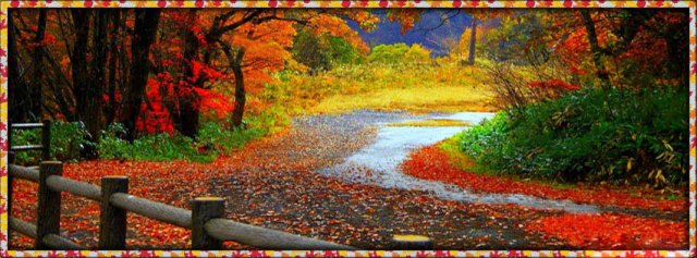 fall-autumn-leaves-falling-