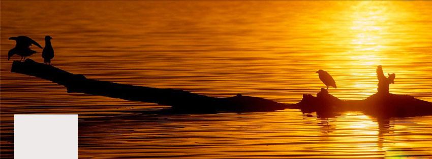 sunsetperch