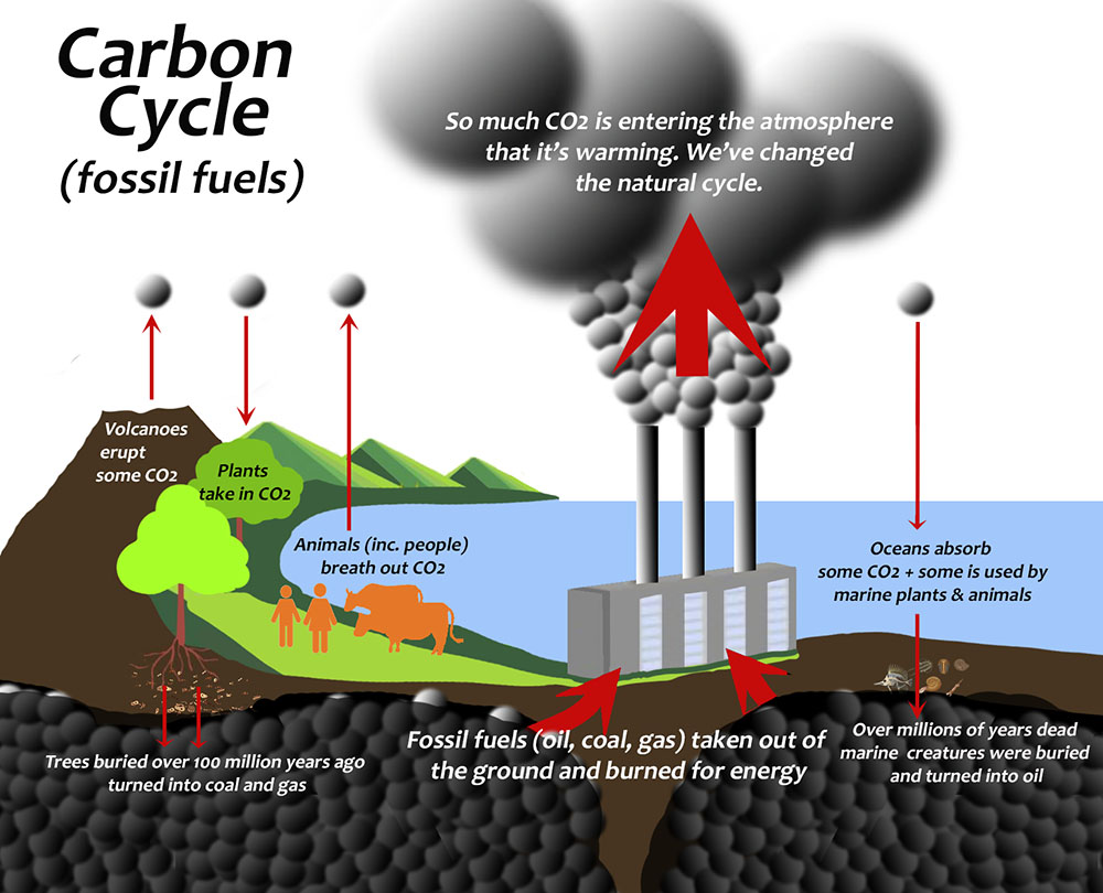 Fig. 3: The carbon in plants and animals is either recycled through natural processes or buried underground. We've been burning vast quantities of carbon (coal, oil, and gas) which took millions of years to lock away underground, and releasing it into the atmosphere as fast as possible. This and replacing native ecosystems that once stored carbon with vast quantities of agricultural land and methane-belching cows, is destroying our once stable climate.