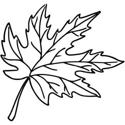 leaf outline maple stamp 904custom