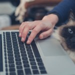 5 things entrepreneurs can learn from cats