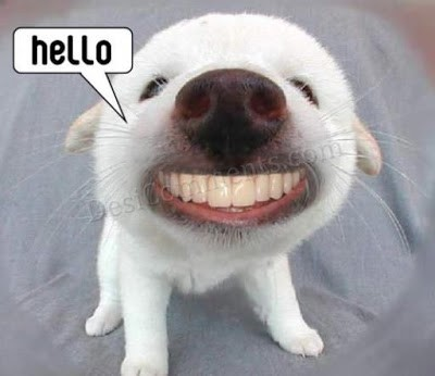 Hello dog promoting your business