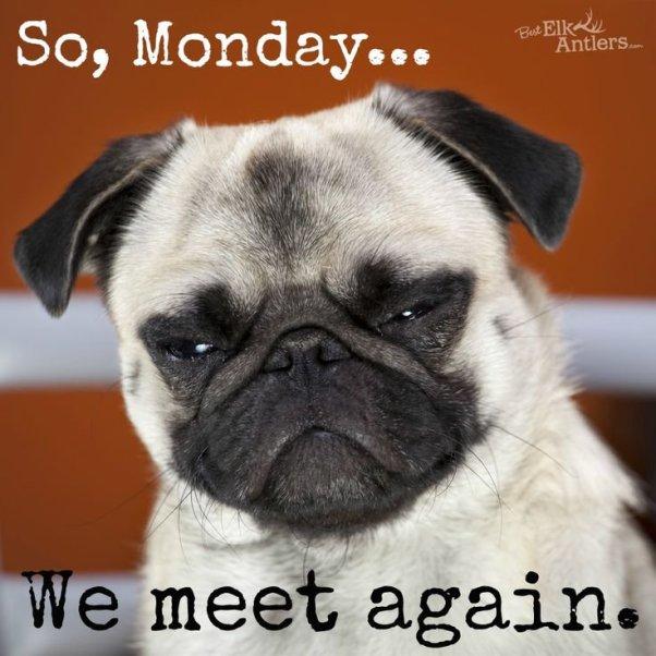Monday Funnies