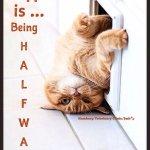 Wednesday Cat