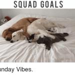 Sunday Goals – 905business.com