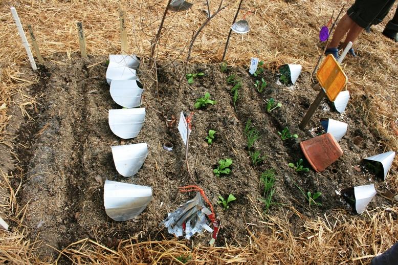 soil-for-life-2009-0661