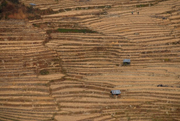 Reisterrassen in Nagaland