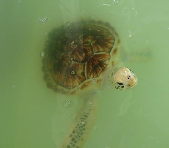 Am Ende der Wanderung dann die Schildkrötenaufzucht