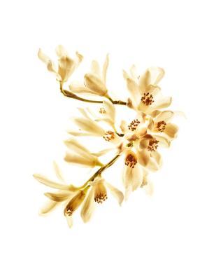Gabrielle. Flor de azahar