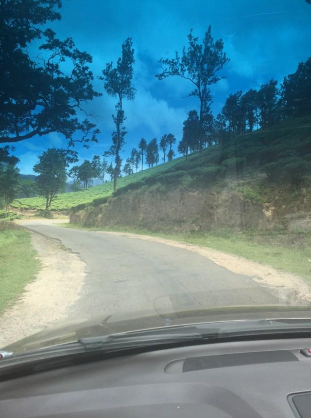 Tea plantations on the way to Munnar ... stunning