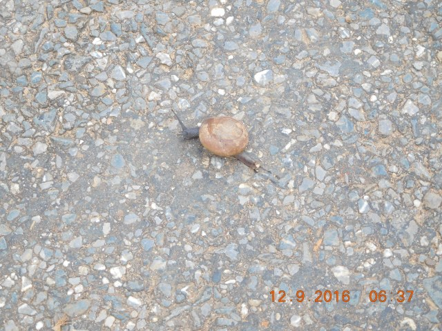 A snail out for its morning walk... hey, everyone needs to keep fit.