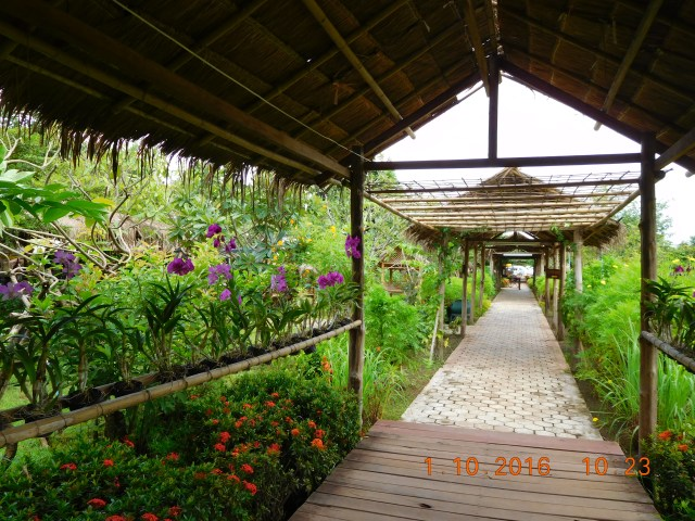 At the Wat Phu complex, you first go to the Museum and this is the way. Beautiful orchids lining both sides.
