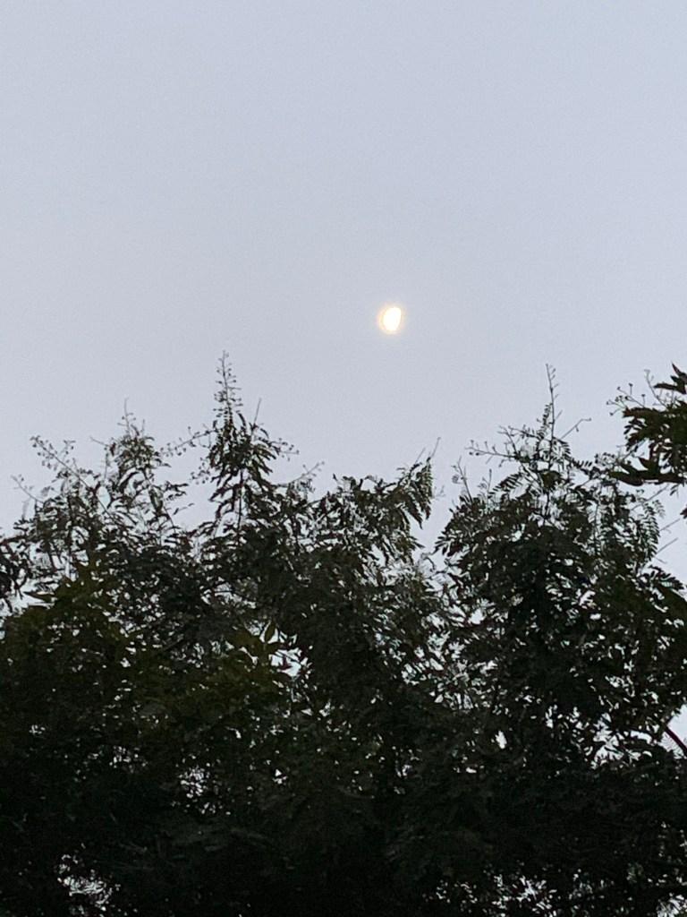 Morning - half moon