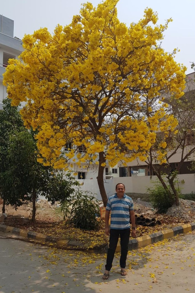 Yellow - Tree
