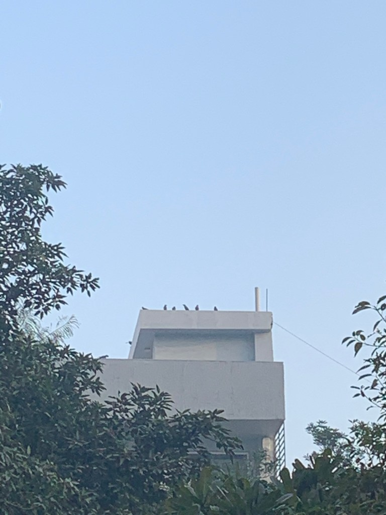 Crow Conference