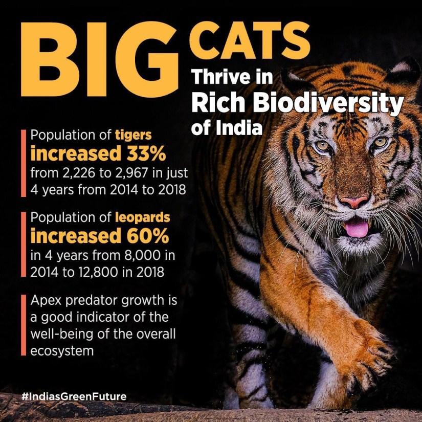 Tigers - Environment 2021