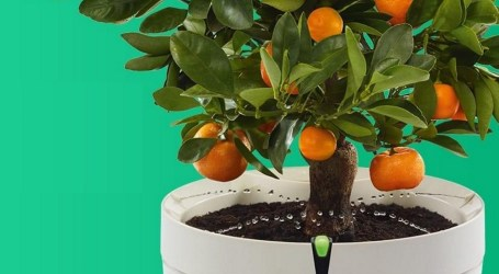 Tak, to jest SMART DONICZKA! Sama podlewa kwiaty i doradza, jak o nie dbać! No, i to jest gotowy produkt!
