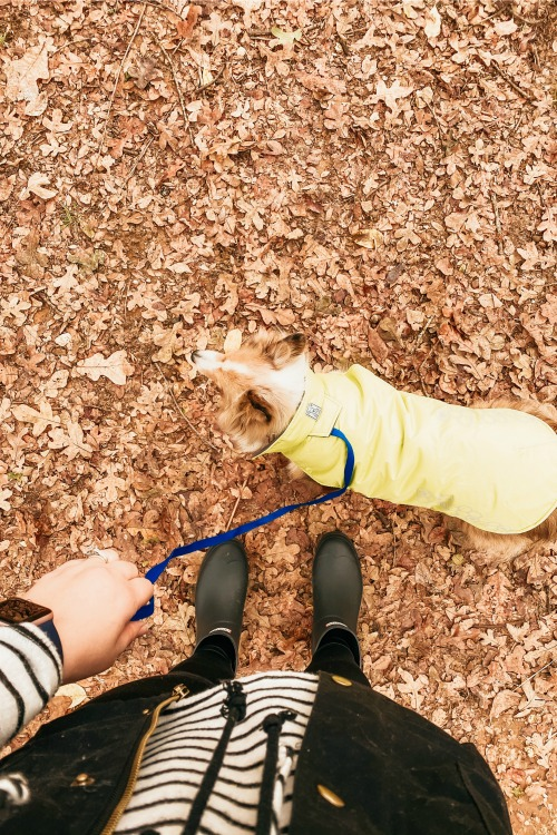 dog wearing a coat on a leash