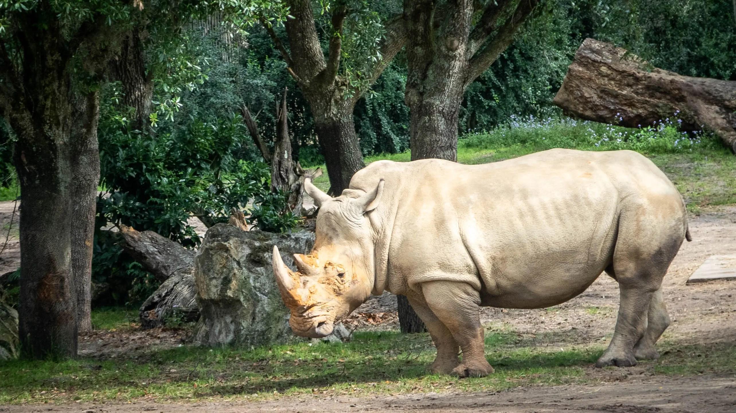 Image of: Tripadvisor Kilimanjaro Safari Animal Kingdom wdw18 919raleigh Kilimanjaro Safari Animal Kingdom wdw18 919raleigh
