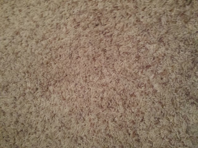 Carpet with Transparent Paper no where to be seen.