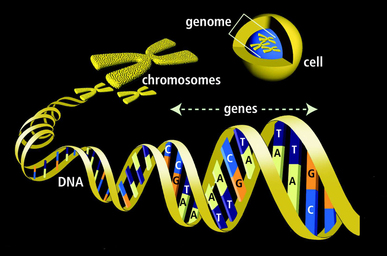 Image result for Human Genome Project