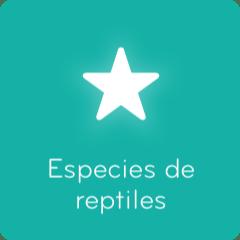 Soluciones 94 Especies de reptiles