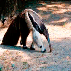 94 anteater picture