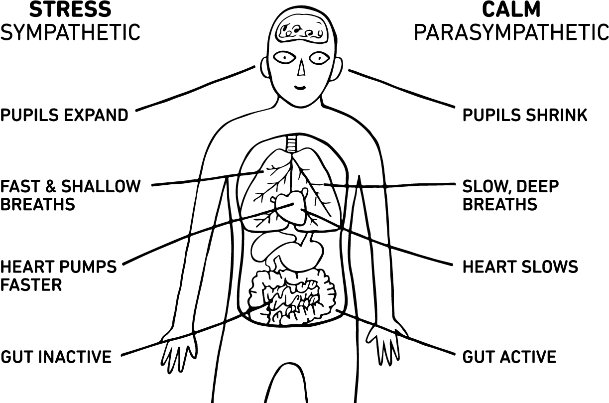sympathetic and parasympathetic diagram labeled foot the freeze response your nervous systems to