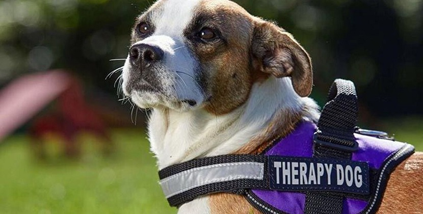 A Few Minutes With a Therapy Dog Might Help Lower ED Clinicians' Stress