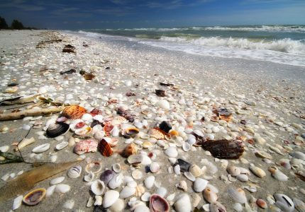 Abundant shells lay on the beach on Sanibel Island, Florida, on the Gulf of Mexico. This is one of the best shelling places. It was taken with a wide angle lens very close to the ground.
