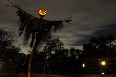 Amazing Halloween Black Decor Ideas To Scary Party Ever 33