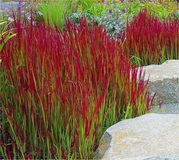Wonderful Grass Landscaping Ideas For Home Yard04