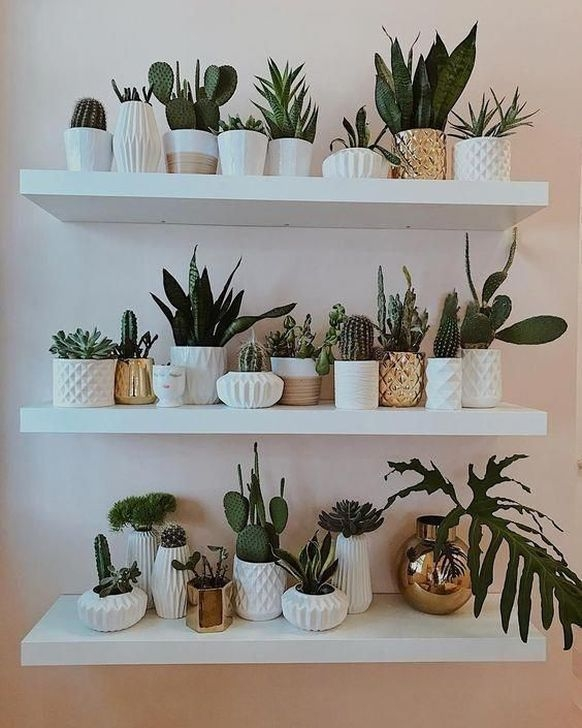 Astonishing Succulent Decoration Ideas For Living Room 02