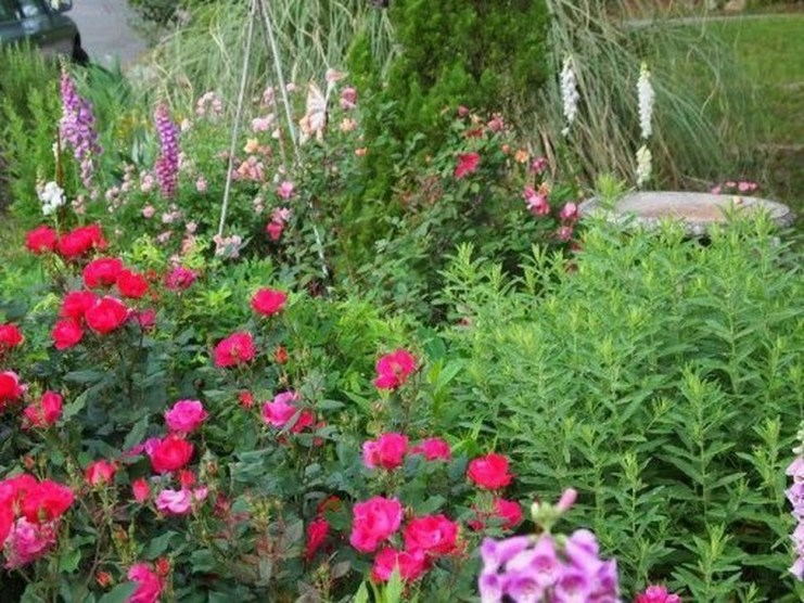 Gorgeous Landscaping Design Ideas For Beginners 34
