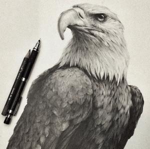 realistic pencil animals drawing stunning animal eagle martinez jonathan bald getdrawings 99inspiration