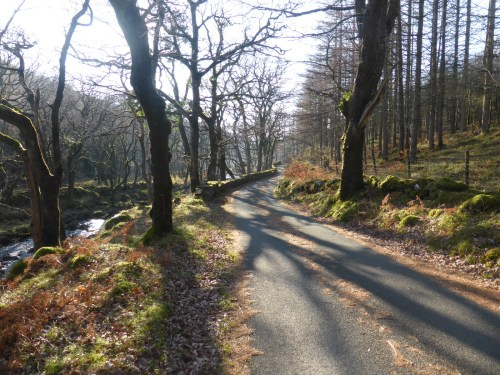 wooded lane with tree shadows