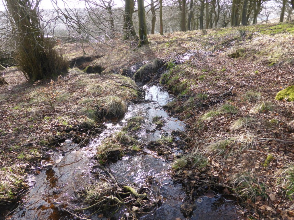 surface stream flowing through wood