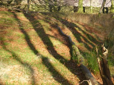 stripey tree shadows