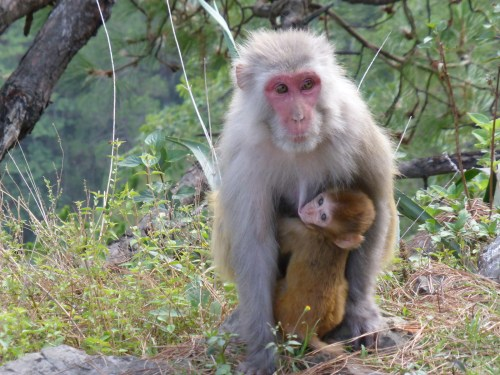 monkey with child