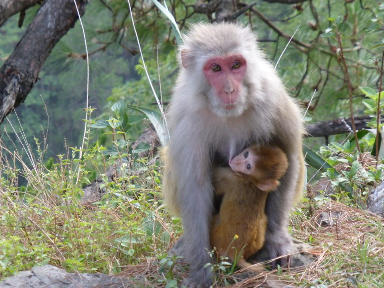 monkey with child