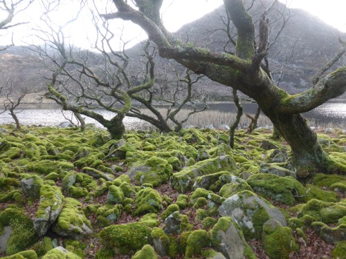 cold low tree branches and mossy stones