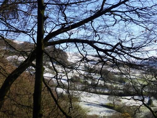 snowy hillside through branches