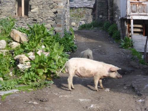 2 pink pigs on lane