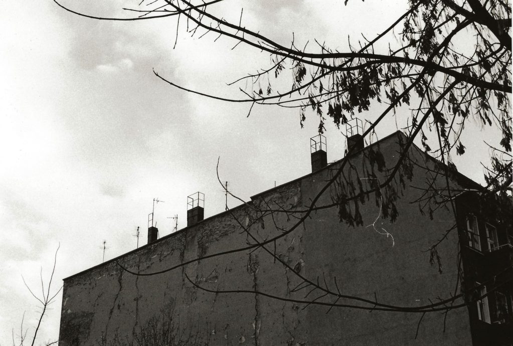 blank tenement wall and tree branch
