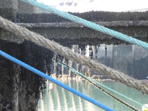 tethering ropes - detail