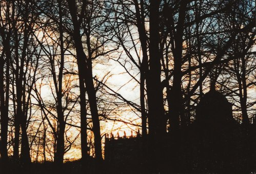 sunset through bare branches