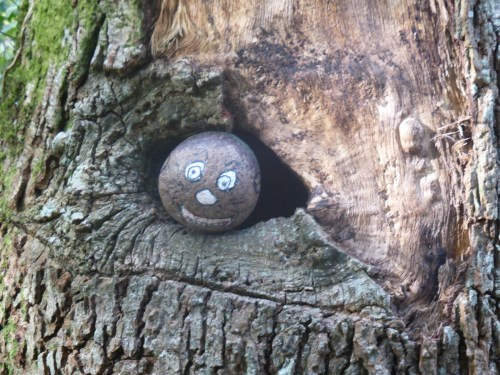 smiley pebble in treetrunk