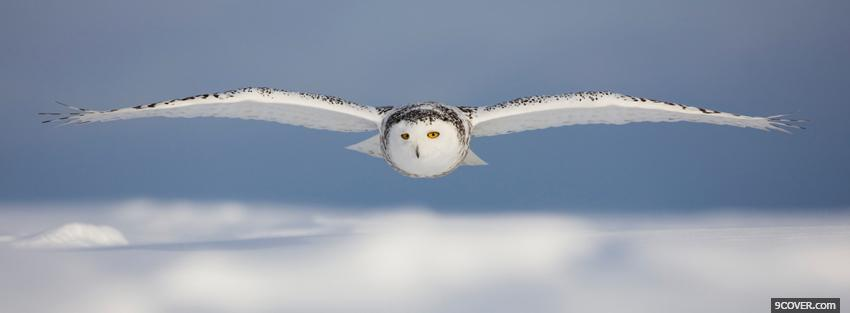Flying Owl Animals Photo Facebook Cover