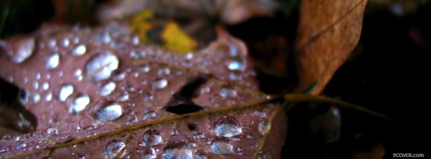 Autumn Rain Nature Photo Facebook Cover